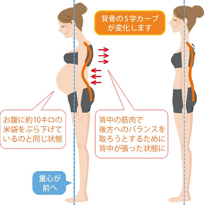 お腹の中の赤ちゃんが大きくなるにつれ、ママの姿勢は変化します。